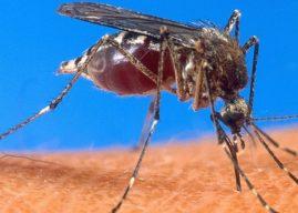 Comment se prémunir du paludisme ?
