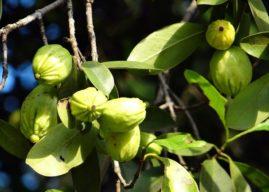 12 plantes brûle-graisse efficaces