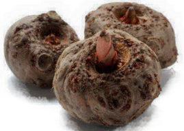 Konjac : avis et efficacité de cette plante coupe faim