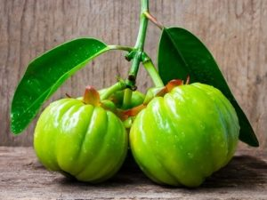 description du Garcinia Cambogia