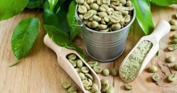 informations sur le café vert
