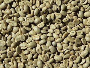 l'origine du cafe vert